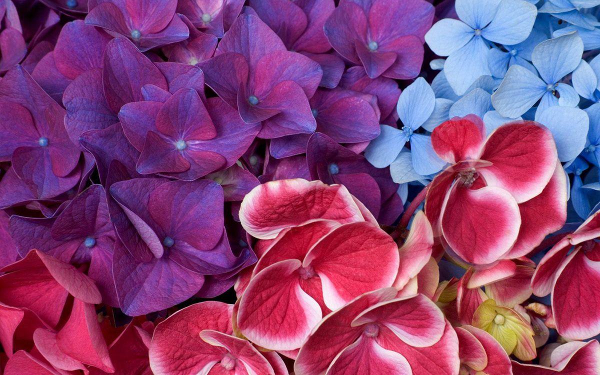 Самые красивые цветы в мире картинки