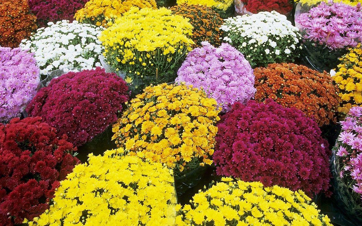 таблица цветов в интерьере кухни фото