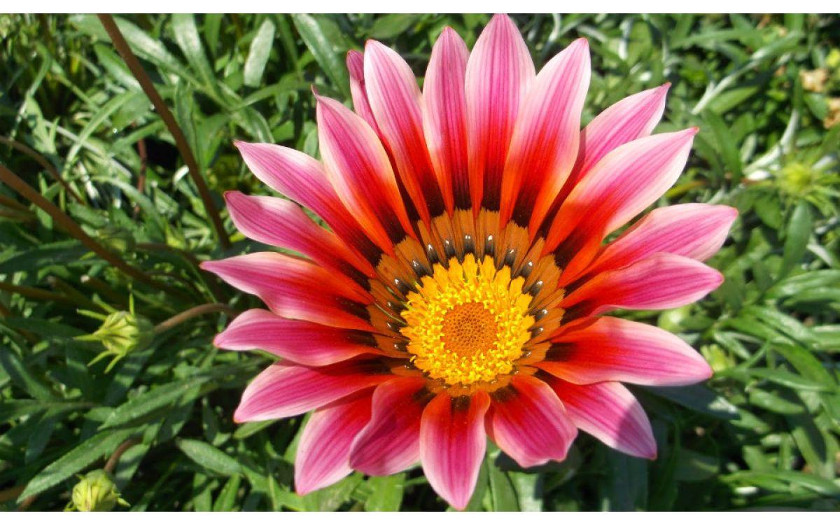садовые с цветы картинки названиями