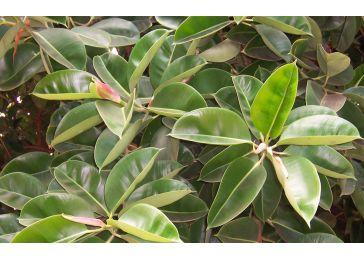 Топ-пять растений, отлично чистящих воздух