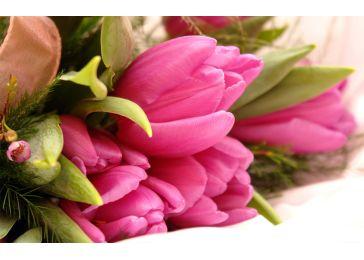 Тюльпаны дот ком