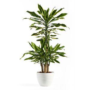 Растения свыше 1 метра