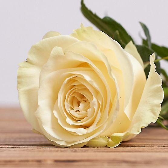Белая роза 60 см. (Поштучно)