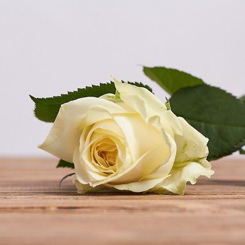 51 роза Аква 60 см