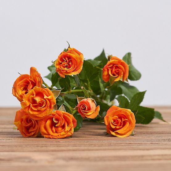 "Голландская кустовая роза ""Фаерворкс"""