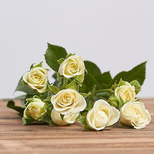"""Голландская кустовая роза """"Сноуфлейк"""""""