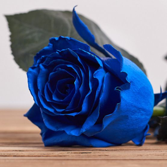 """Голландская роза """"Синяя"""""""