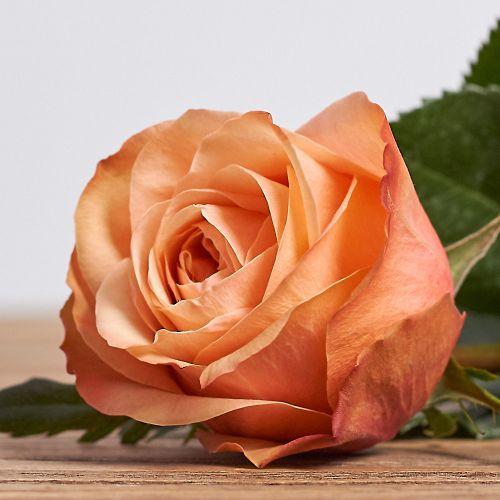 """Голландская роза """"Кахала"""""""