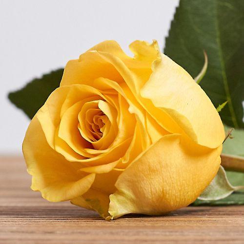 """Голландская роза """"Махана"""""""