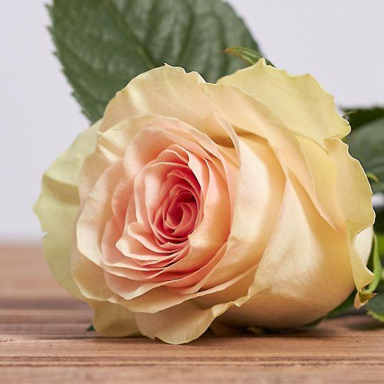 """Голландская роза """"Марципан"""""""