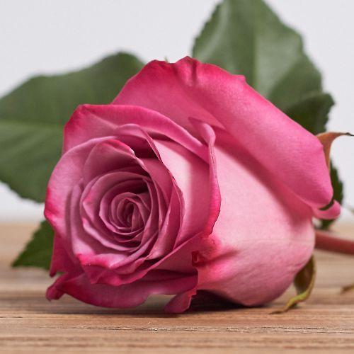 "Голландская роза ""Муди блюз"""