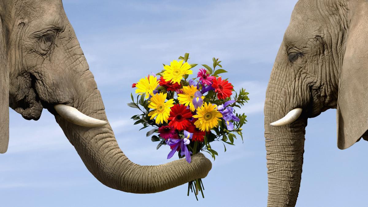 Цветы на день рождения Харьков