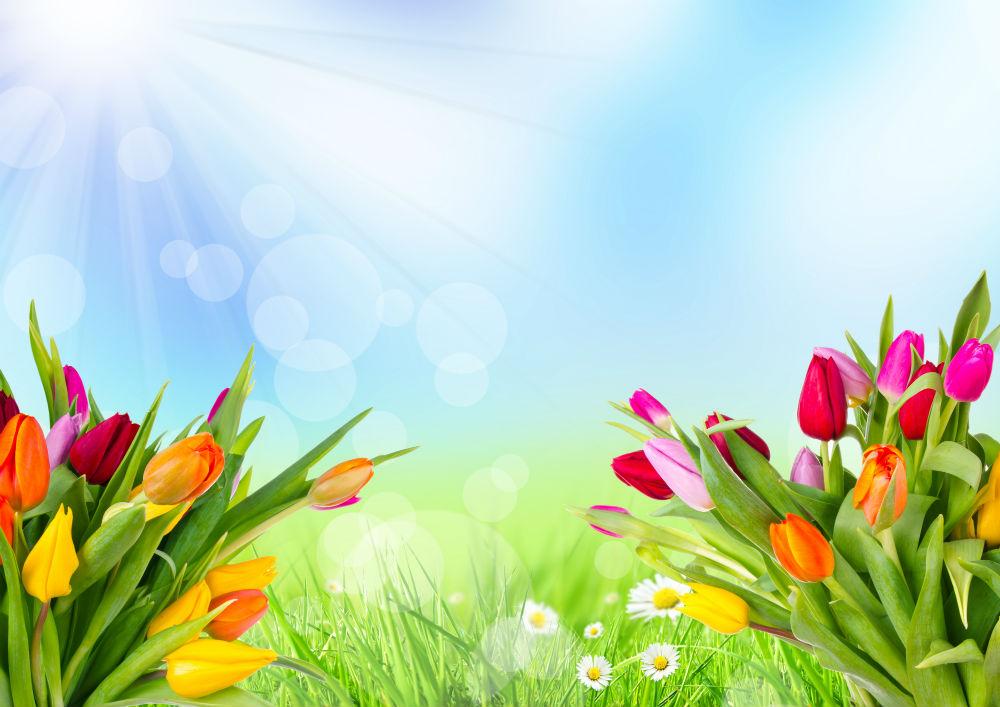 Цветы в Харькове