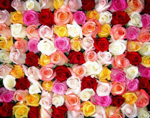 Интернет магазин цветов в Харькове