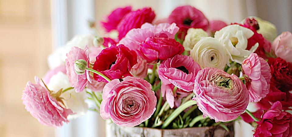 цветы Флорина