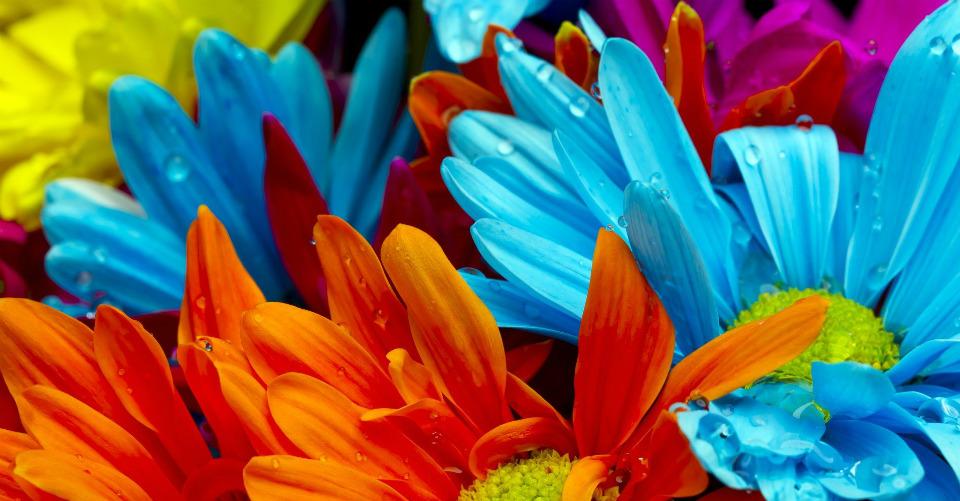 изменяем цвет цветов