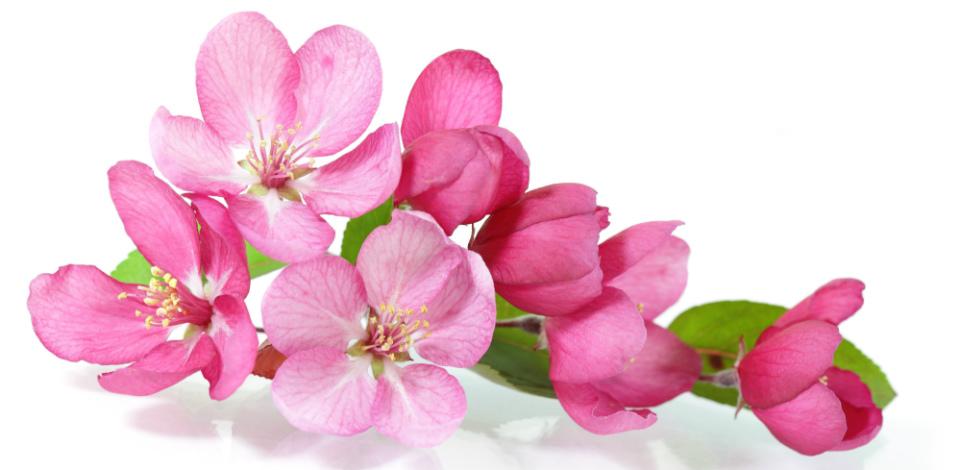 полезные цветы